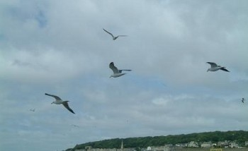 Gulls hovering at Weston-super-Mare